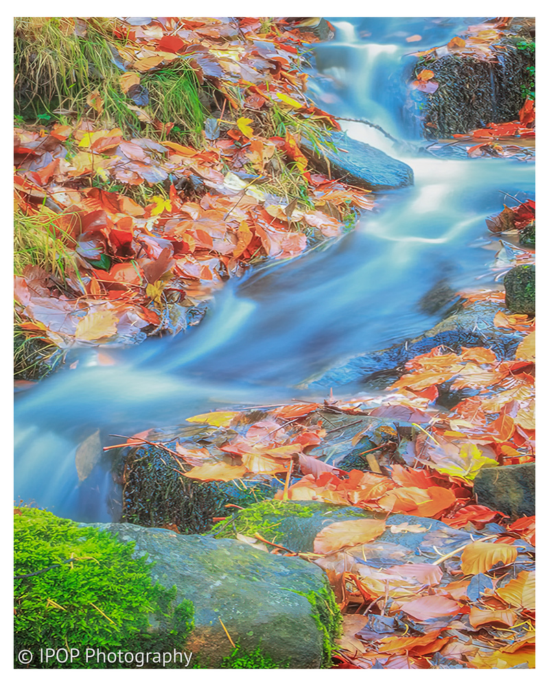 The Flow of Fall by Matthew Martin