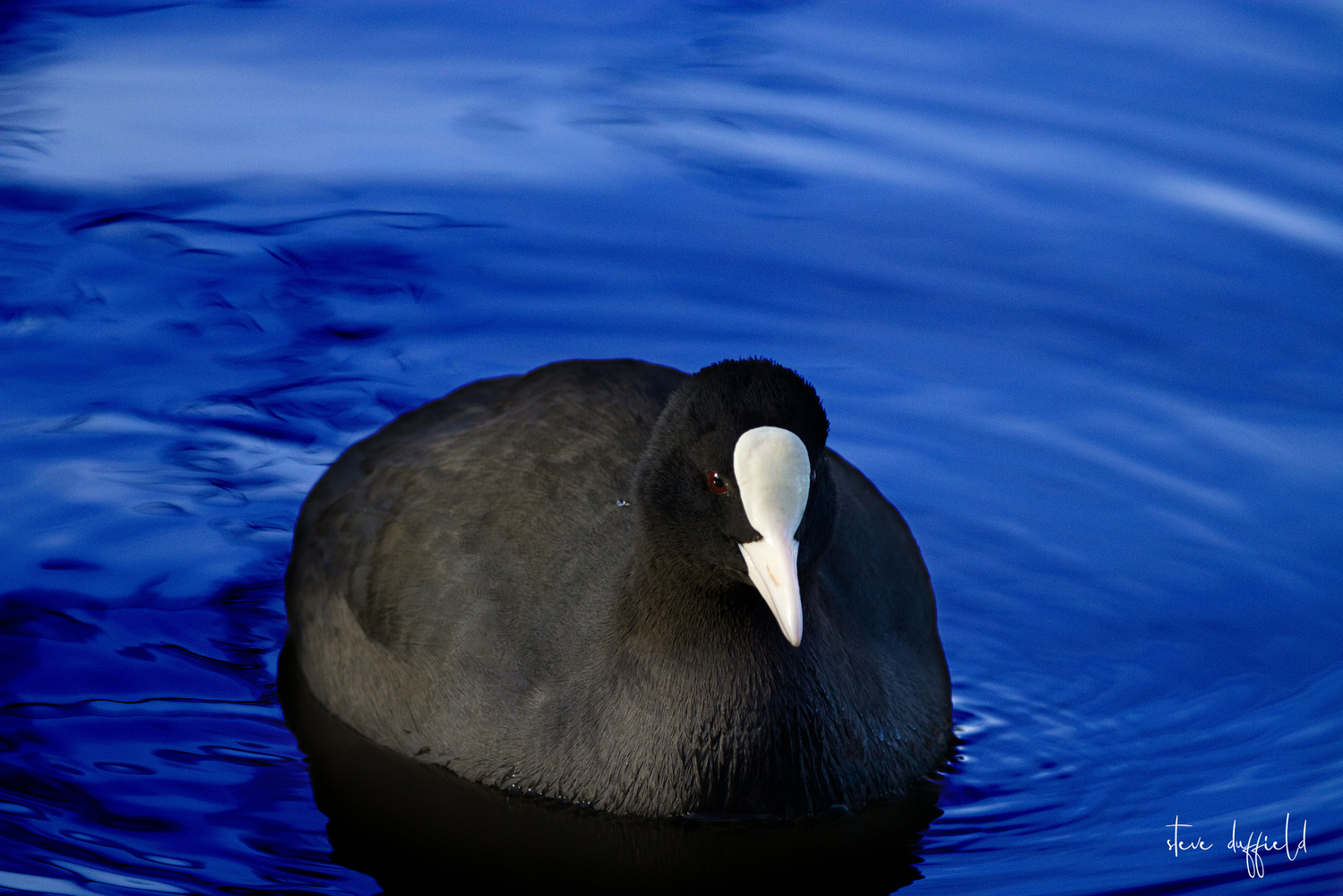 COOT by stephen duffield