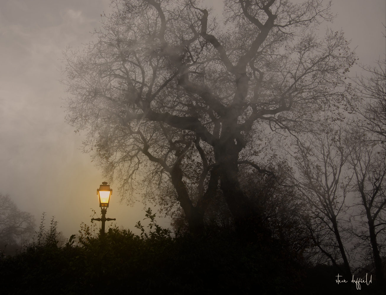 FOGGY STREET LAMP by stephen duffield