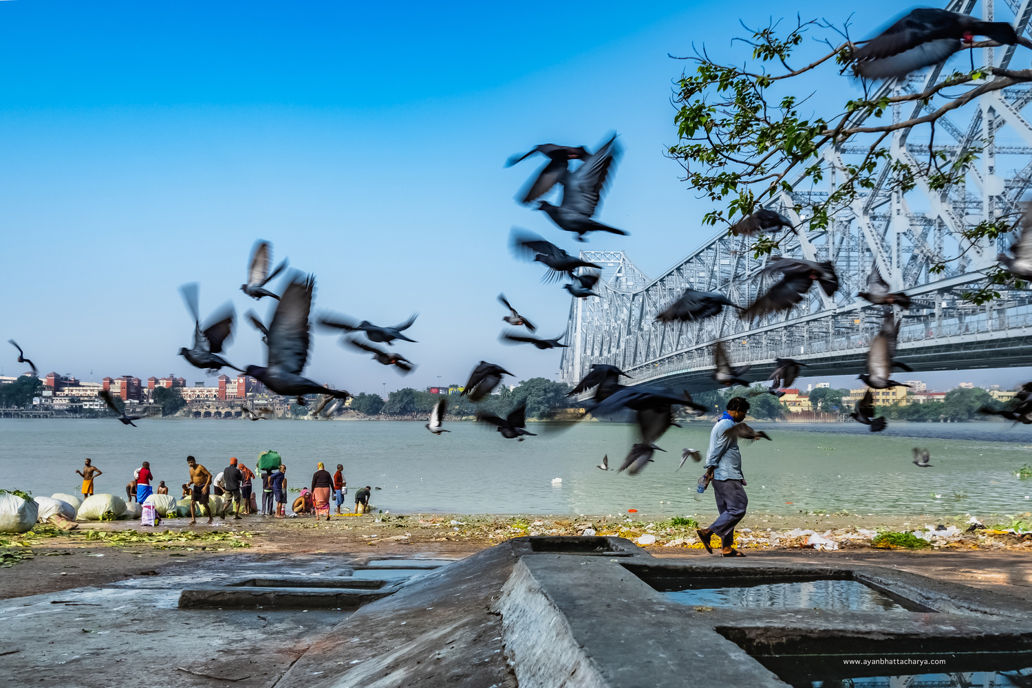 Flock Of Pigeons by Ayan Bhattacharya