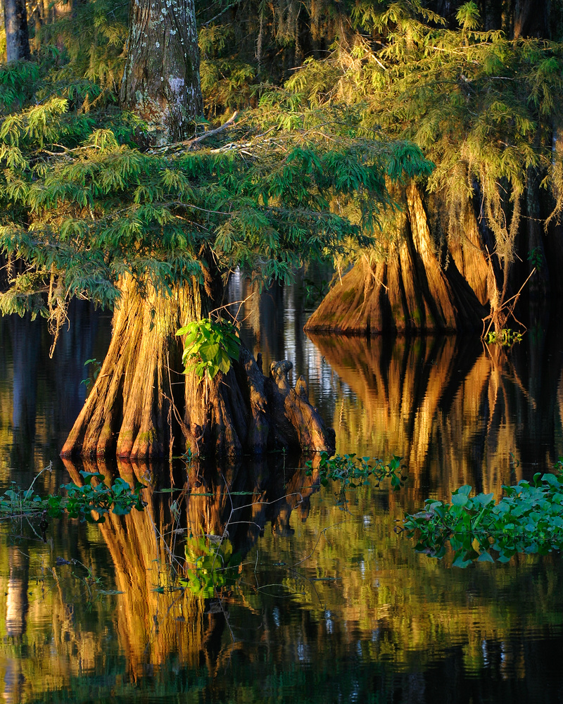 Cypress Reflection by Thomas Even