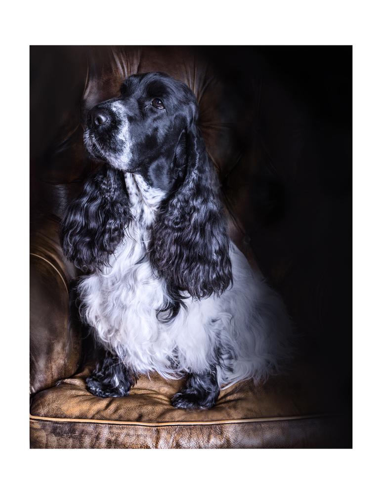 Emilies Puppy by melinda brown