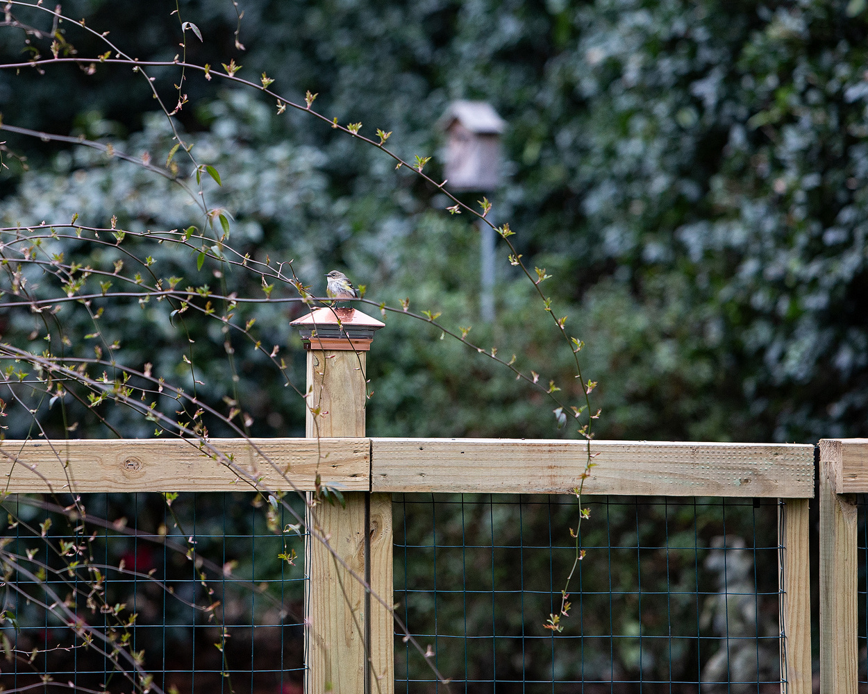 when the birds come to the feeder by melinda brown