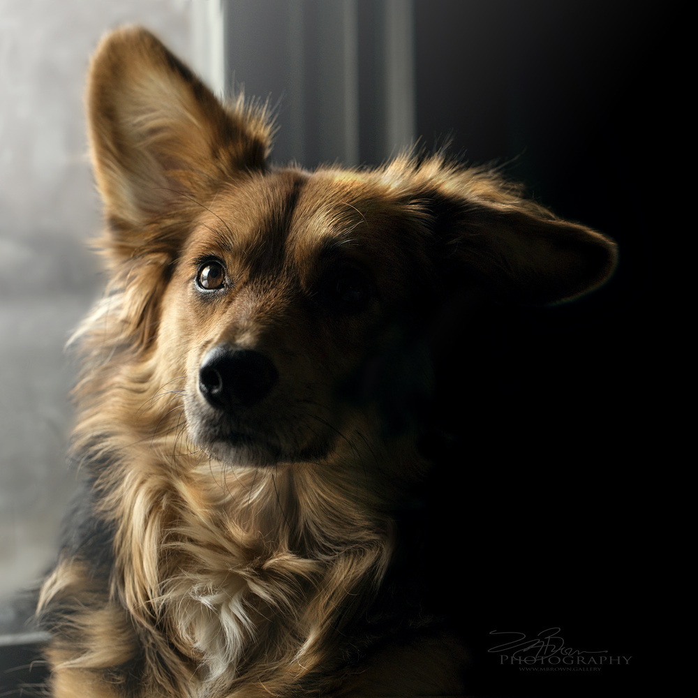 Penny in the winter light of St.Paul by melinda brown