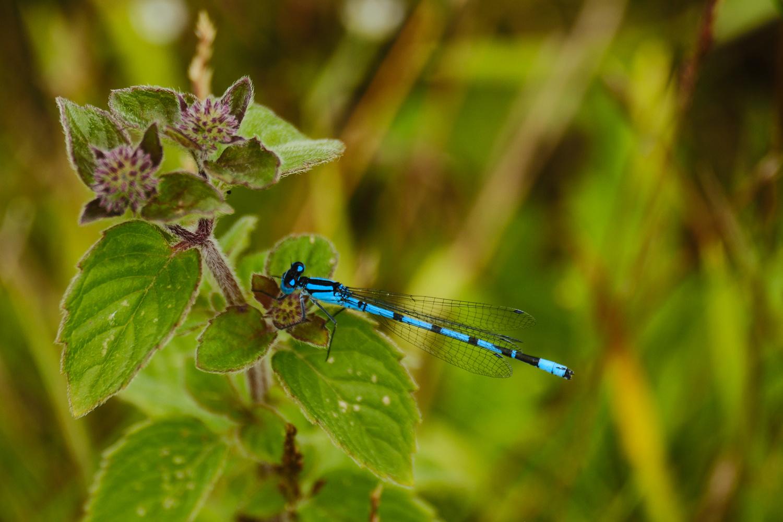Common blue damselfly by Henk de Haan