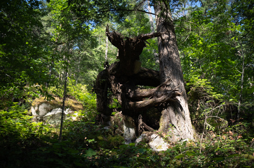 The Ent of Hope by Colin Henderson