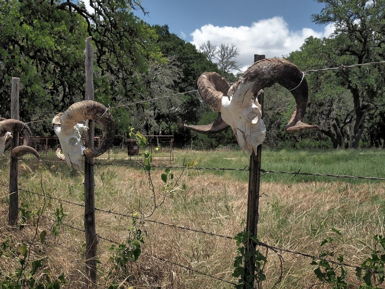 Kerrvile Texas by Steve Carson