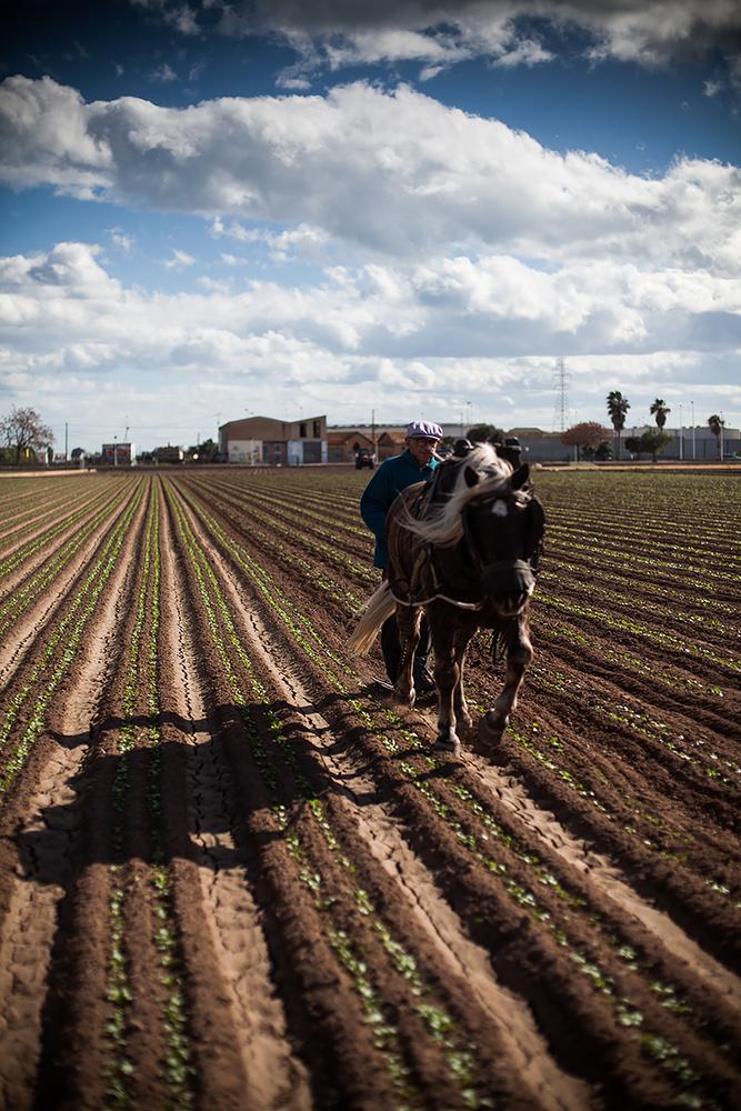 La Huerta Valenciana by Owain Shaw