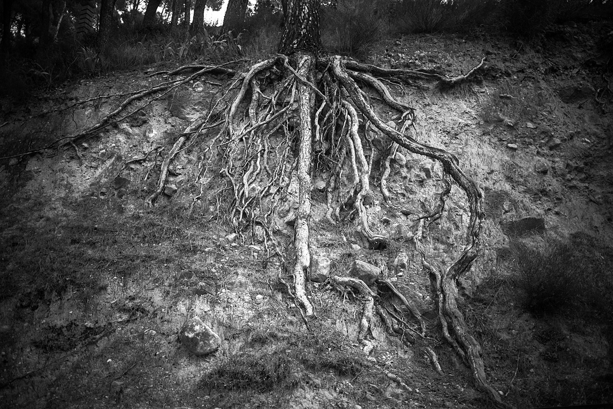 Roots by Owain Shaw