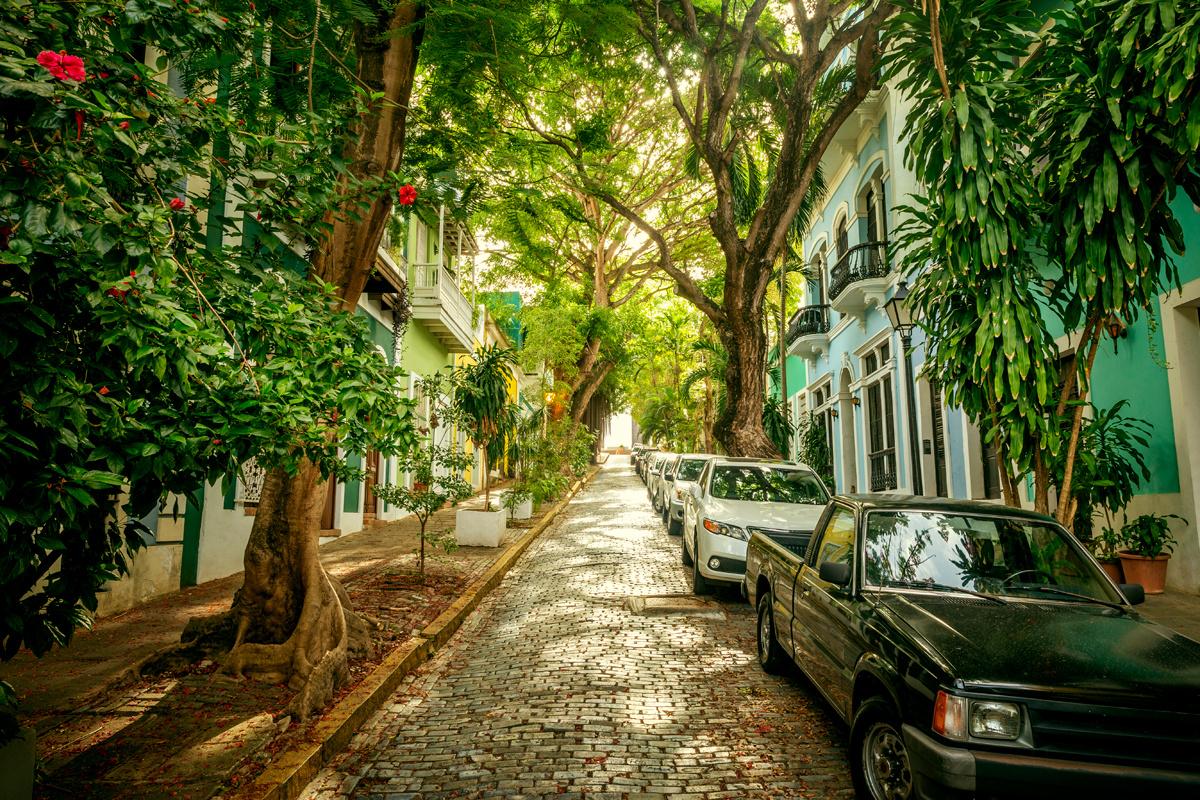 Jungle Street by Mikolaj Niemczewski
