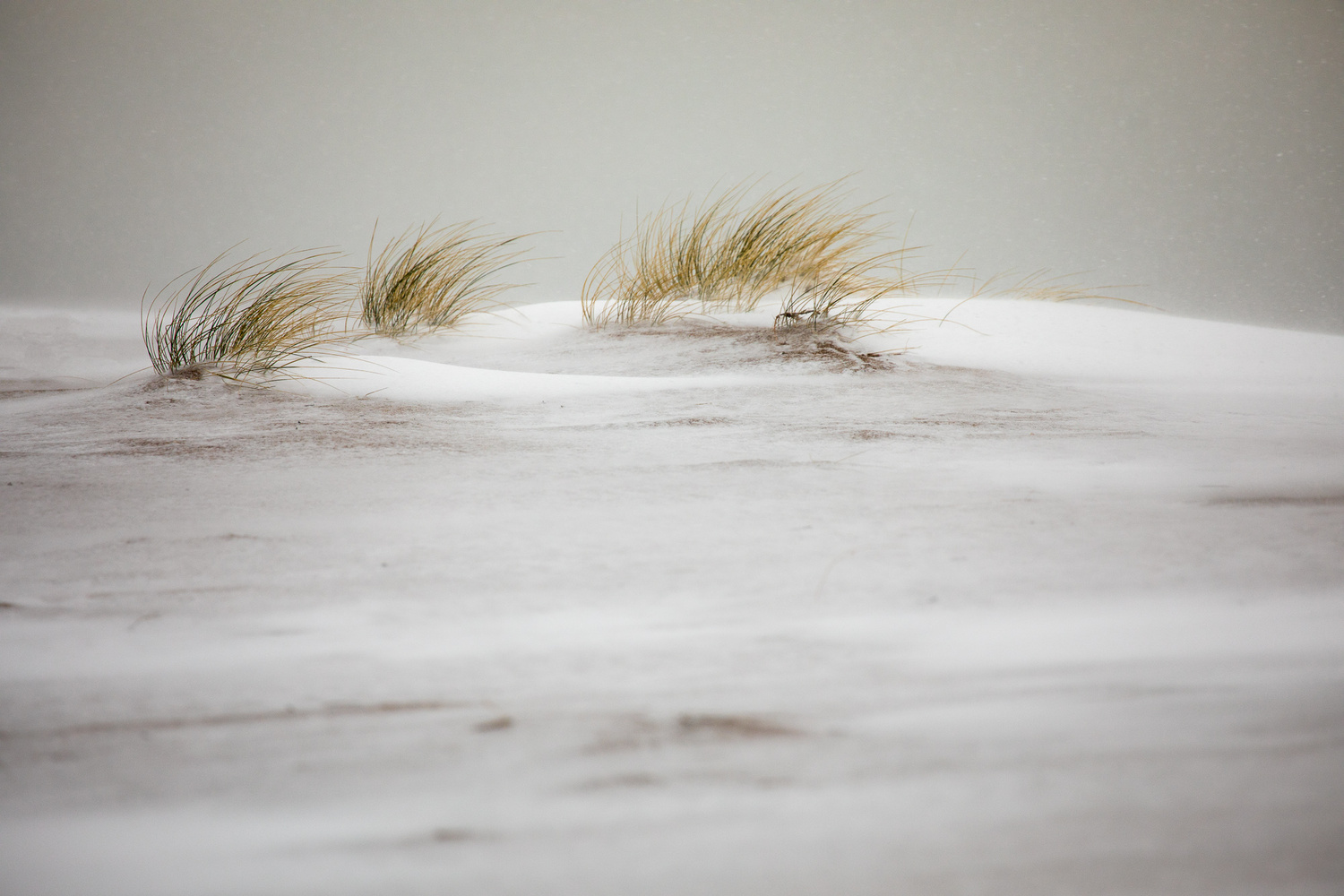 snow in the dunes by YL Photographie
