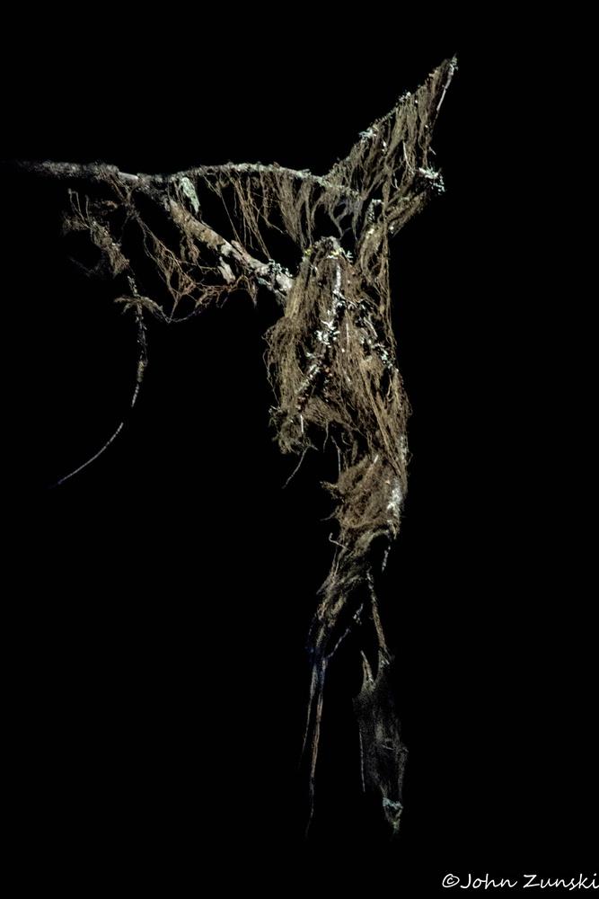 Lichen Goddess by John Zunski