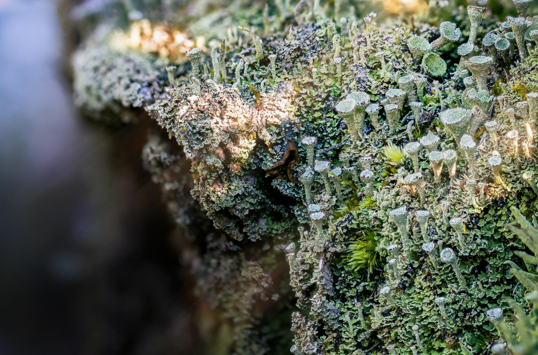 Cliffs of Lichen by Dylan Miller