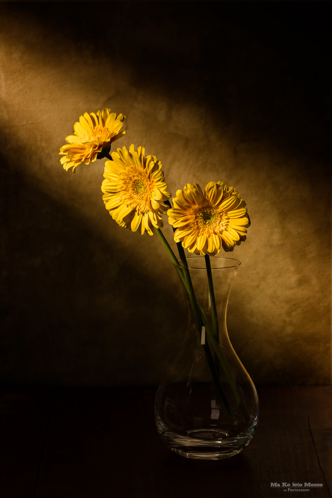 Yellow by Luis Santos