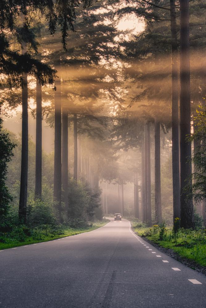 Sunrise in the Speulderforest by Jaimy Leemburg