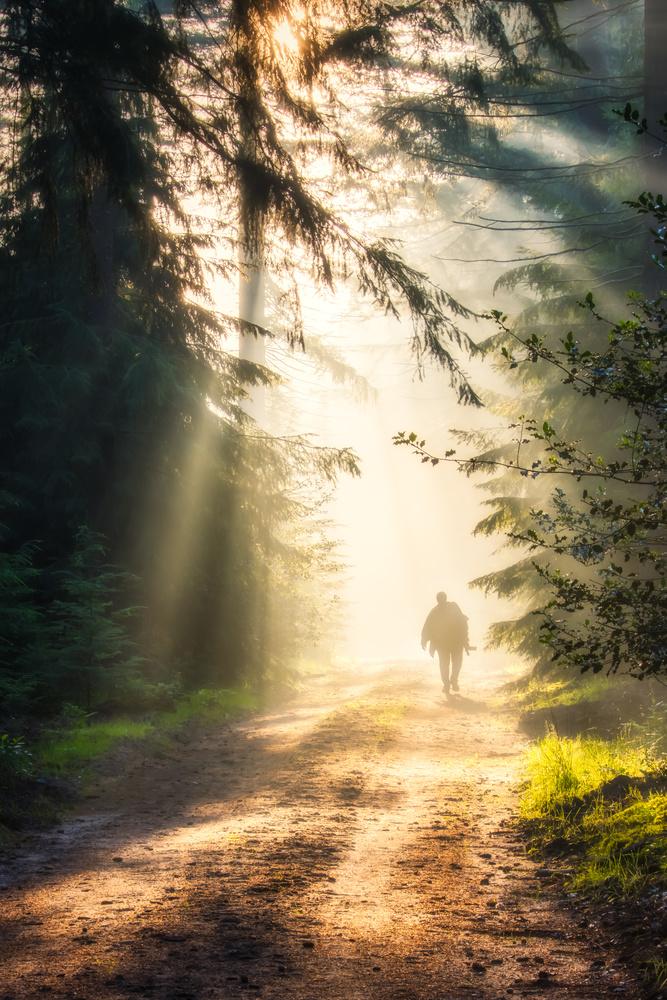 Walk in the sunlight by Jaimy Leemburg