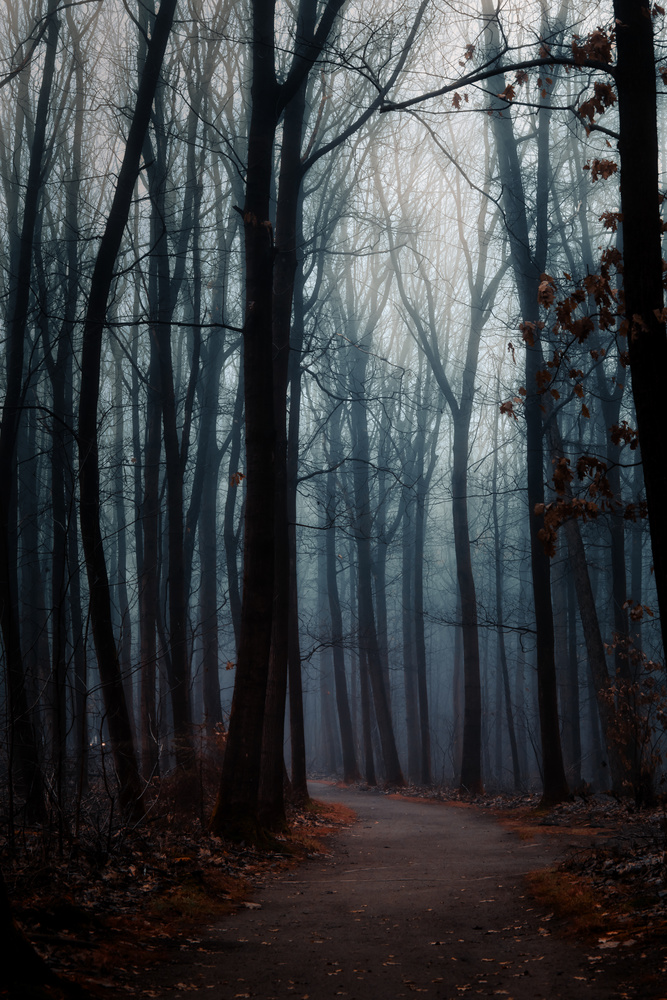 A misty and haunted forest by Jaimy Leemburg