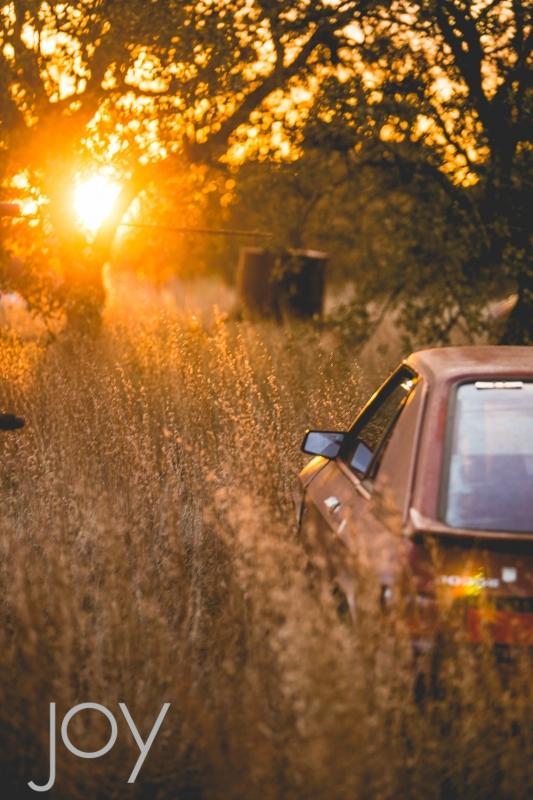 Old Dodge in the Junkyard  by Joy Franklin