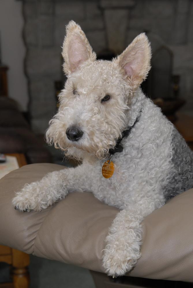 Terrier by Stanley Westfall