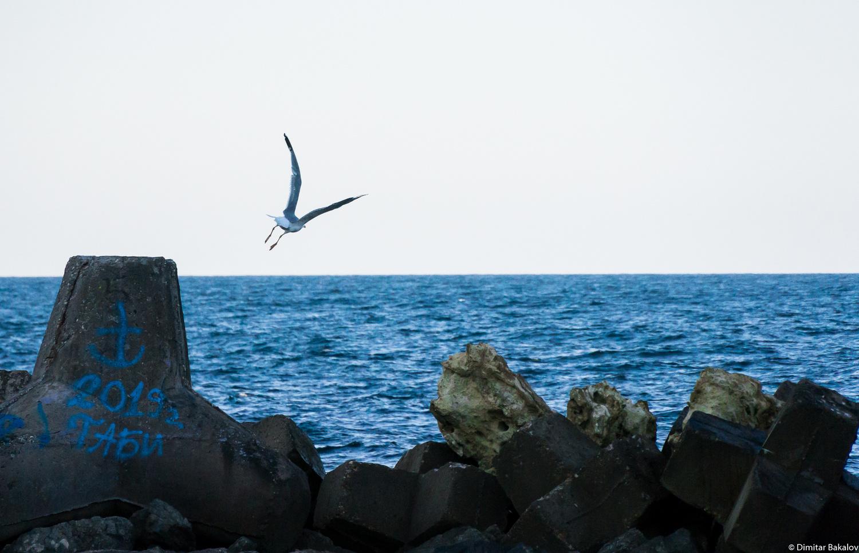 Take off by Dimitar Bakalov