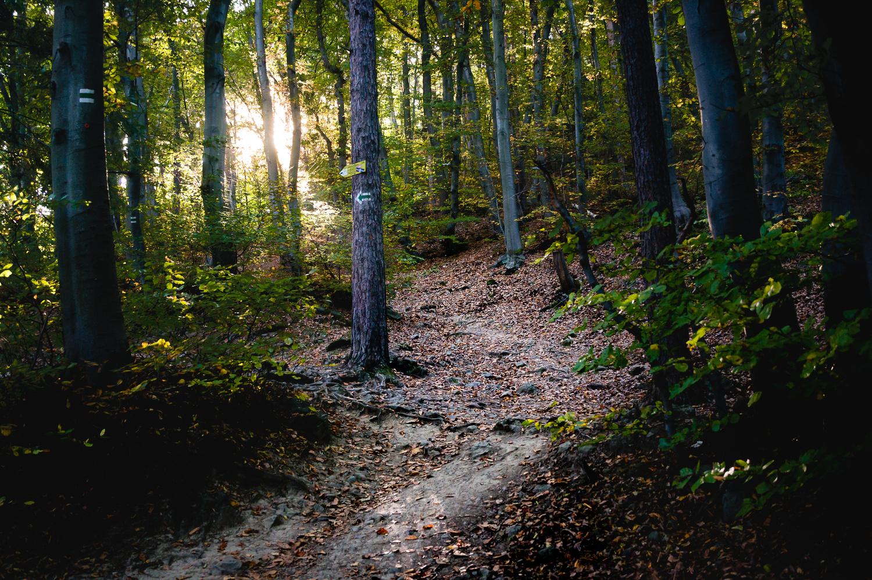 Follow the path by Dimitar Bakalov