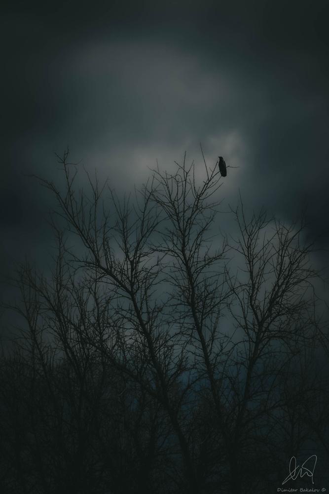 The Raven by Dimitar Bakalov