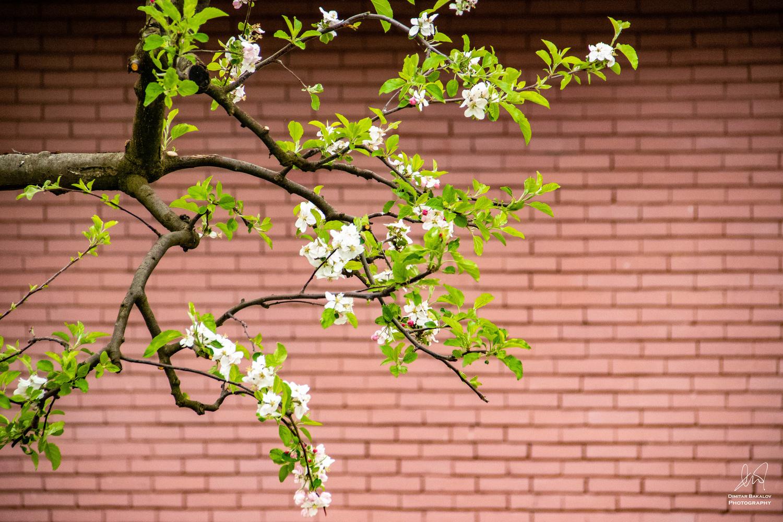 Spring minimalism by Dimitar Bakalov