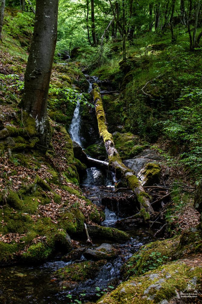 Into the woods by Dimitar Bakalov