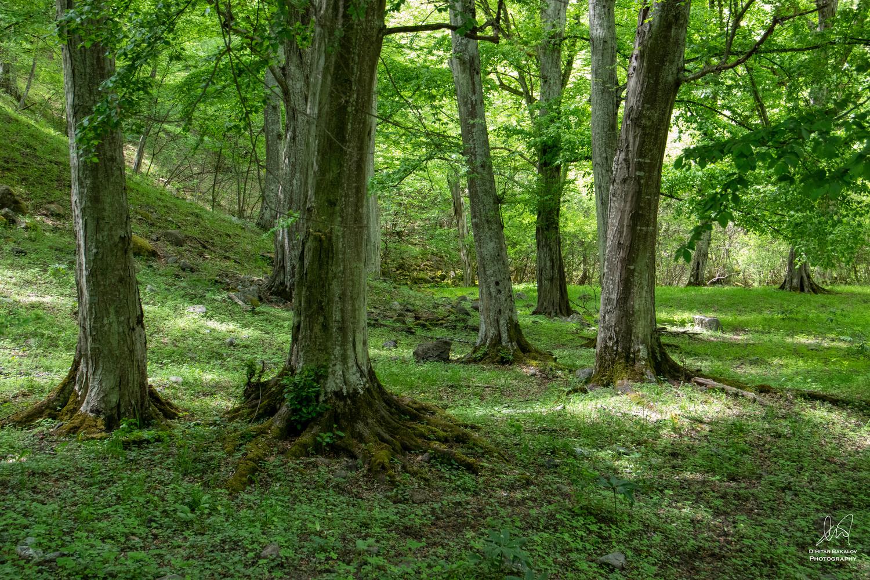 Woodlands by Dimitar Bakalov