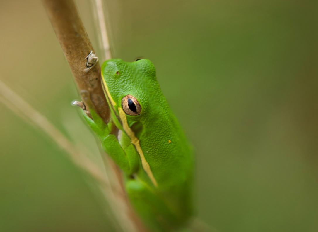 Tree Frog by Joey Hamner