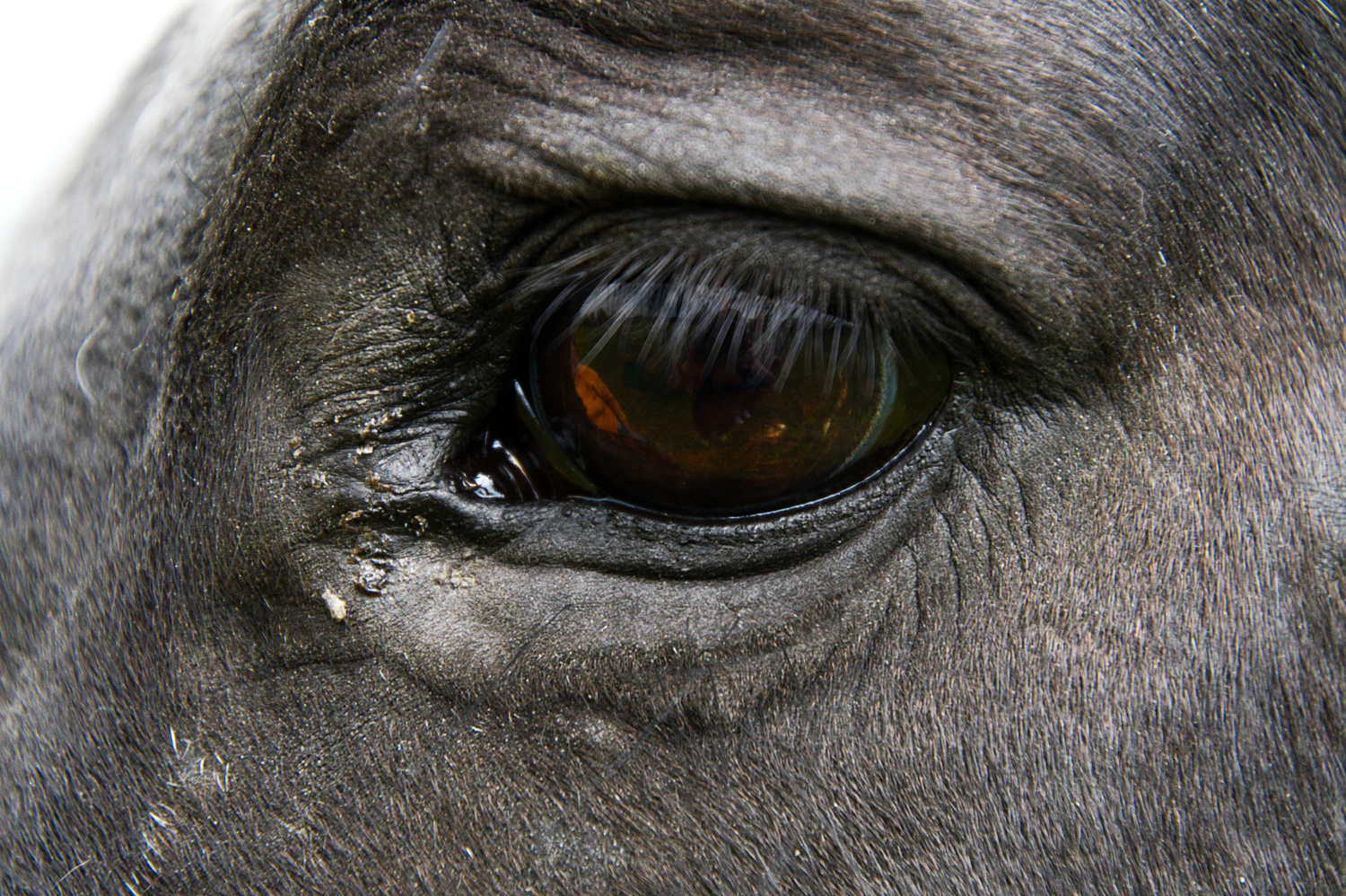 """""""Eyes are Windows to the Soul"""" by Joey Hamner"""