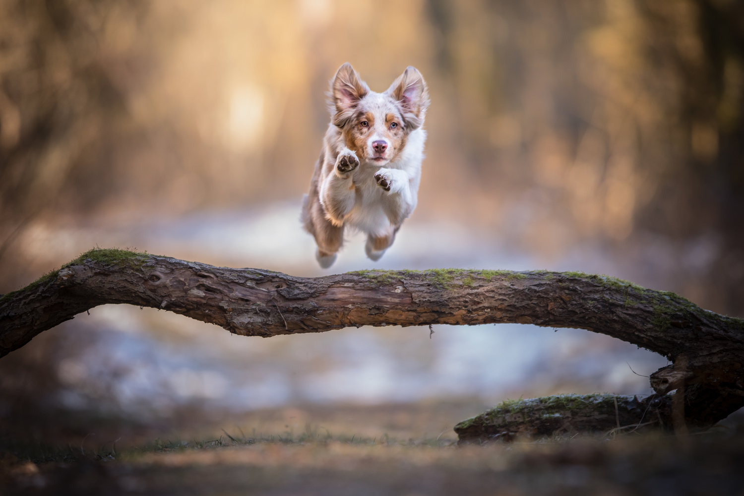 Flying Yankee by Sylv Lettal