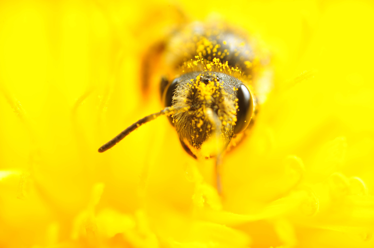Bee. it's a bee. by Michael Willis
