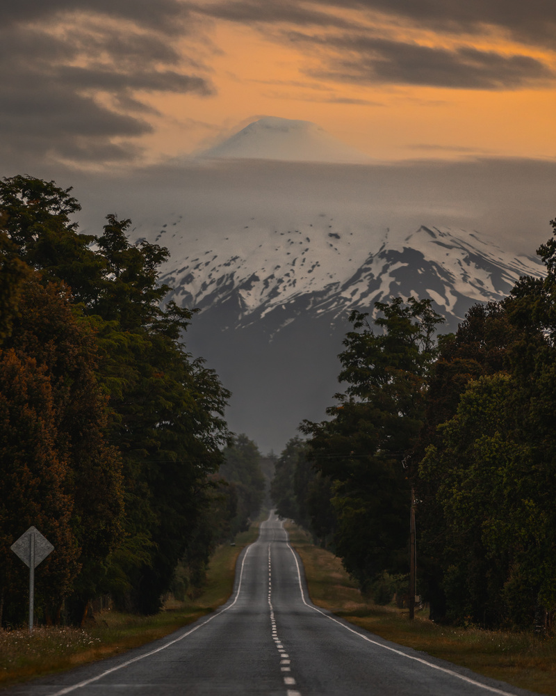 This is the Road by Alejandro Schott