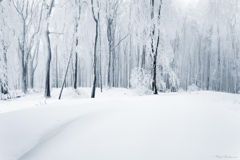 Frozen forest by Vladimír Kucharovic