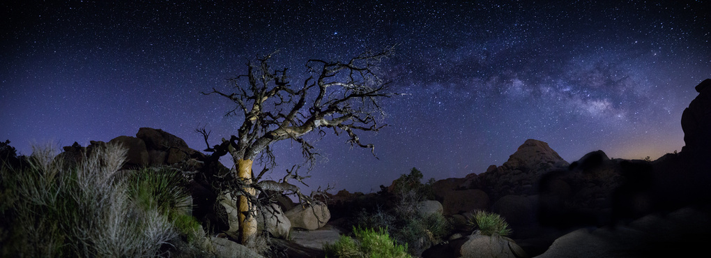 Ancient Pinyon Pine at Joshua Tree framed by the Milky Way. by Eric Gould