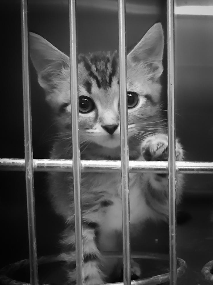 Shelter kitten by David Birozy