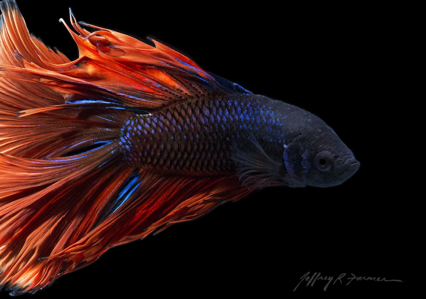 """Fish on Fire"" by Jeffrey R Farmer"