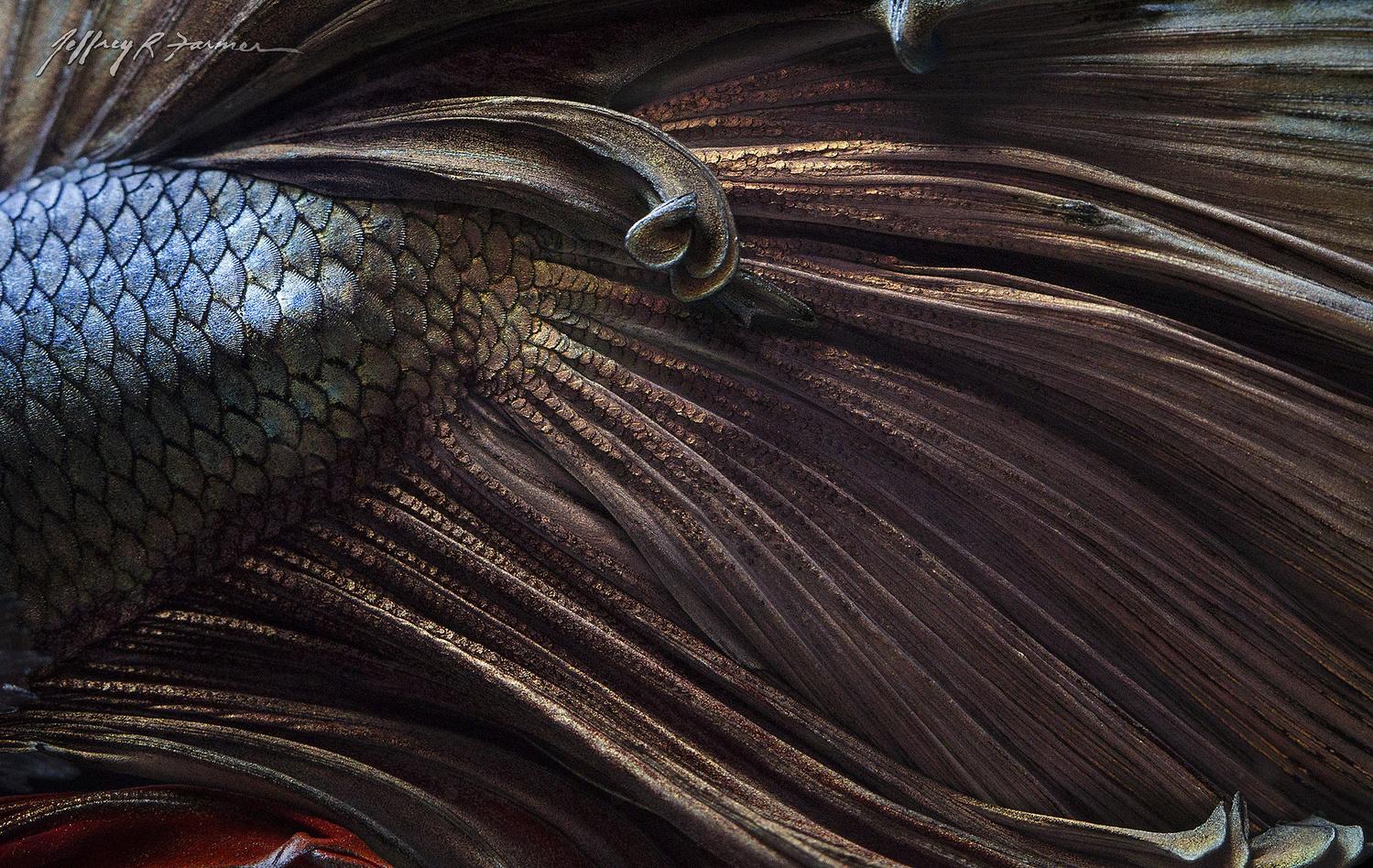 """""""Amber Waves"""" by Jeffrey R Farmer"""