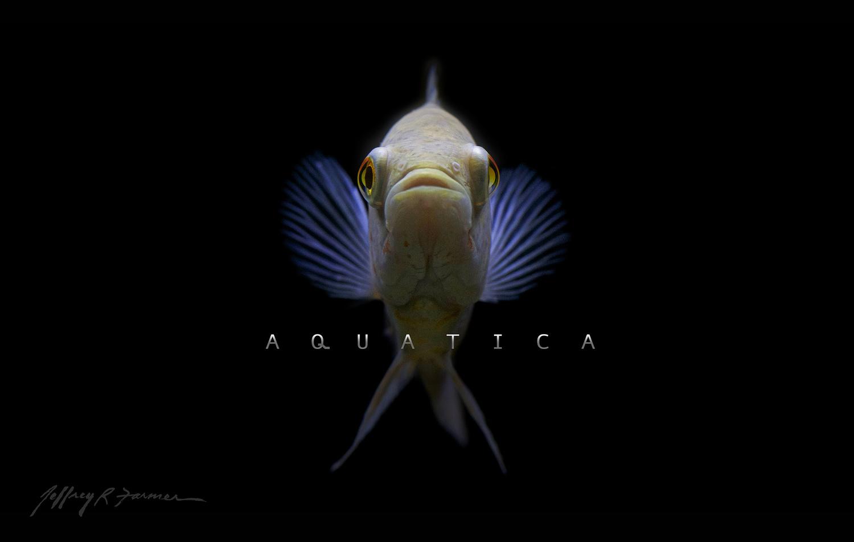 """""""Aquatica"""" by Jeffrey R Farmer"""