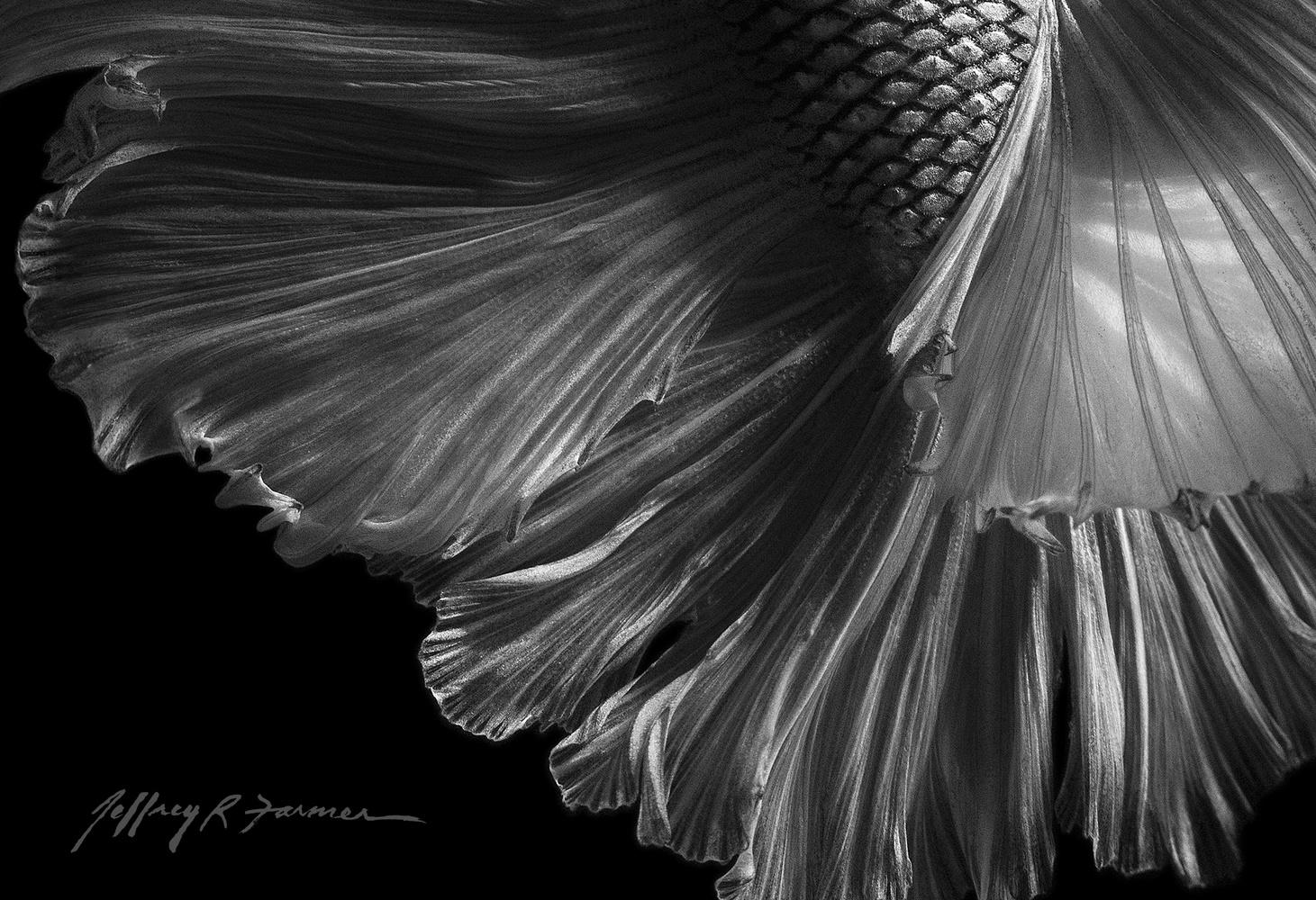 """Diaphanous"" by Jeffrey R Farmer"