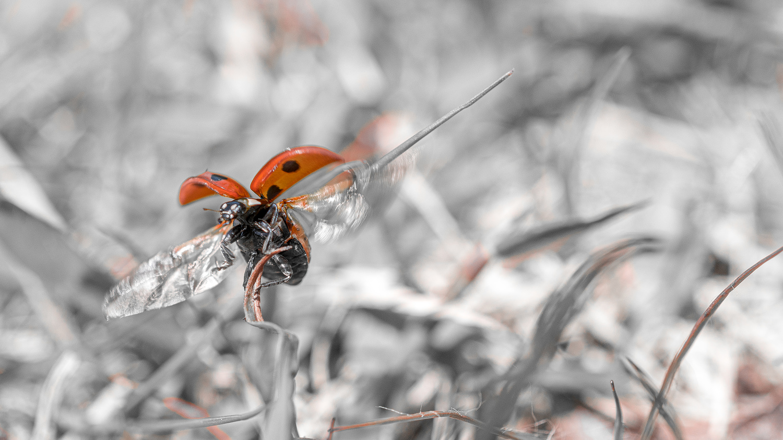 Fly to the next. by Kazuya Shimizu