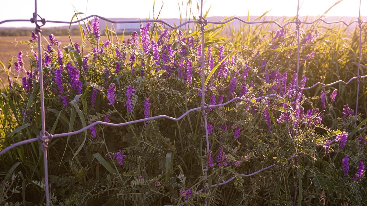 Lilac in the Sun by Natalia Sadowski