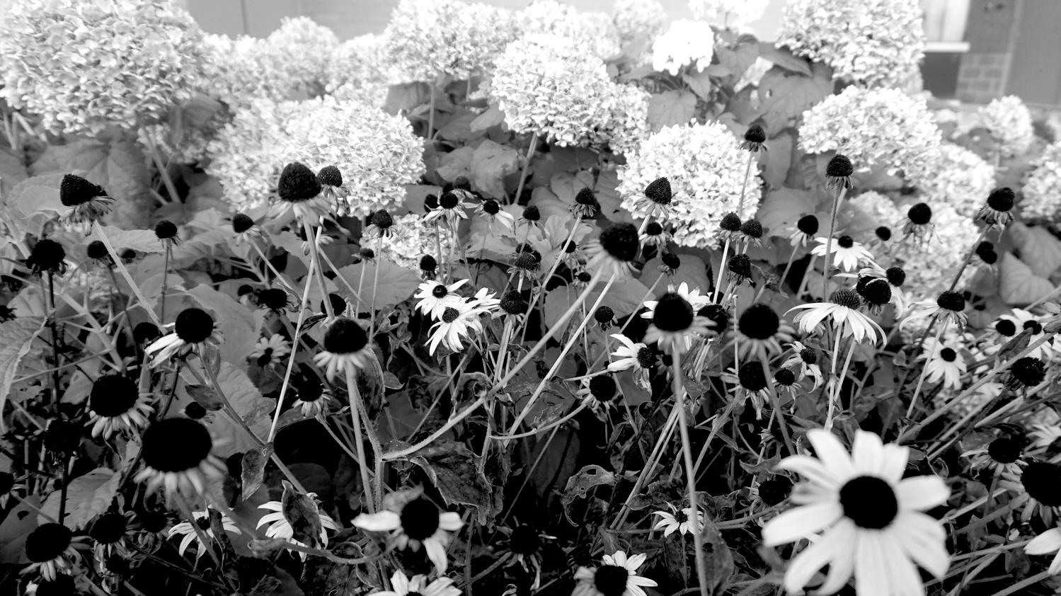 Flower Party by Natalia Sadowski