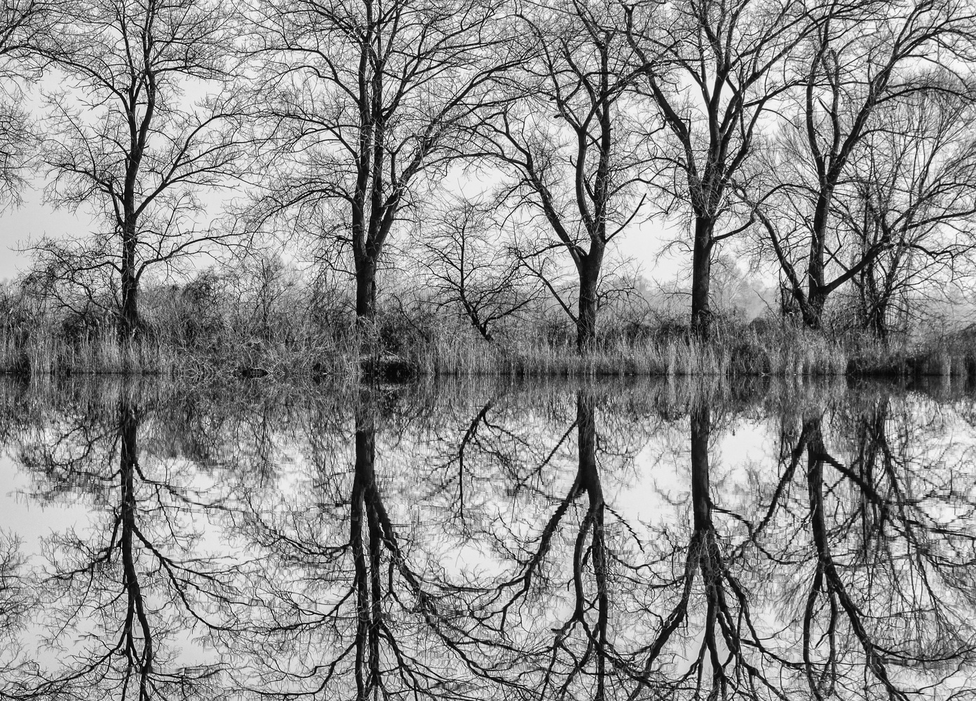 In the swamps of Slavonia. by Antun Lukšić