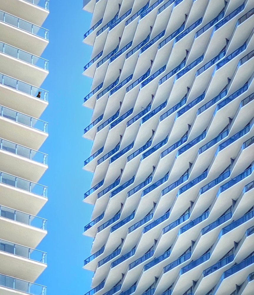 Barking Balconies by Michelle Simmons