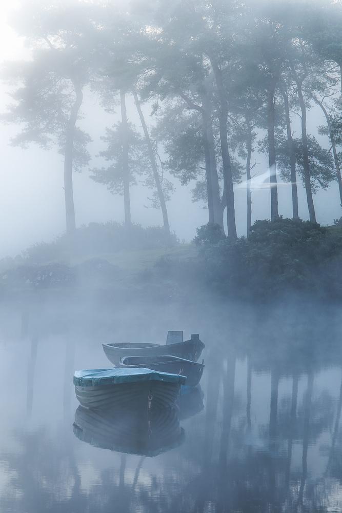 Ghost Swan by Sylvan Buckley