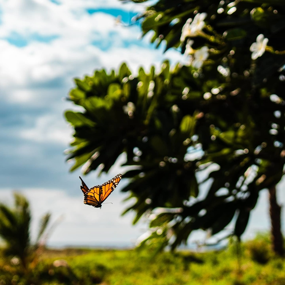 Monarch by Sean Fitzpatrick