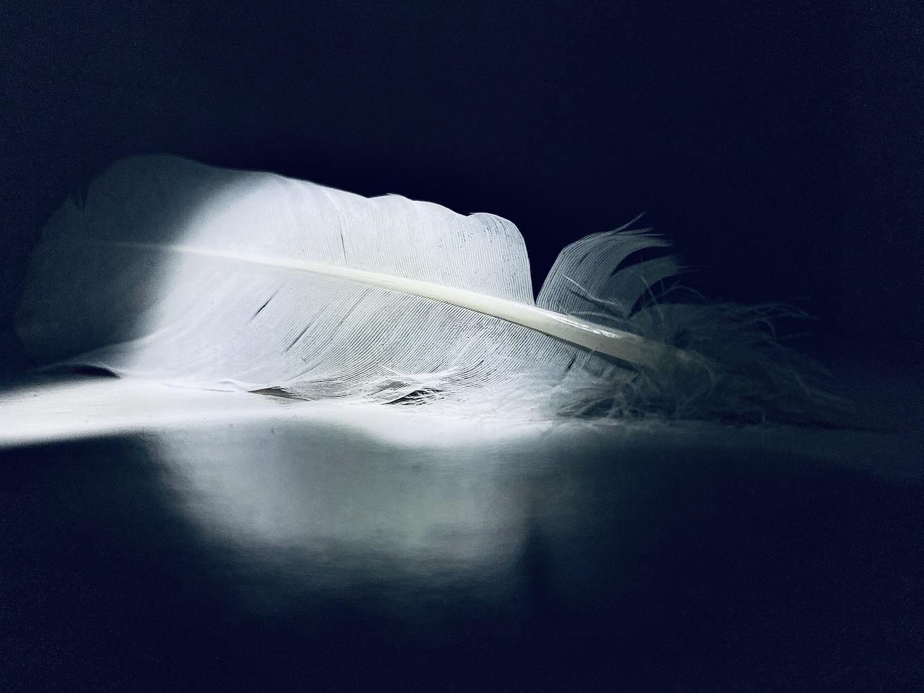 Angel feathers by Edrin Spahiu