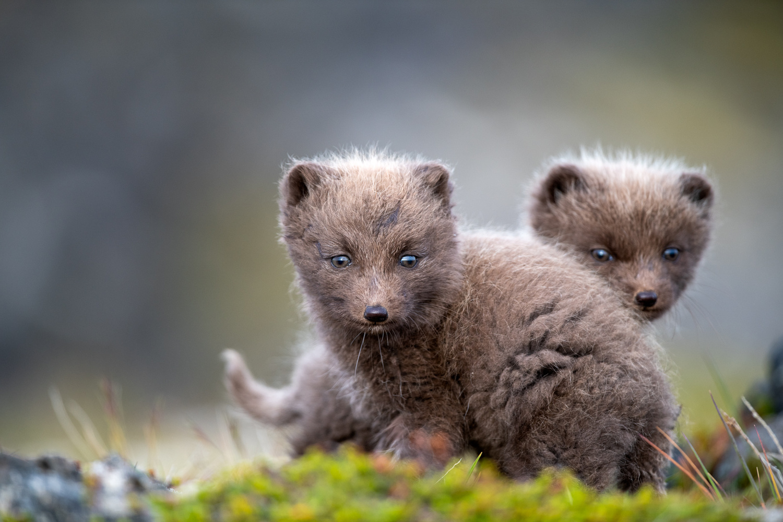 Two wild siblings by Einar Gudmann